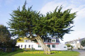 Il n'est pas beau cet arbre ?